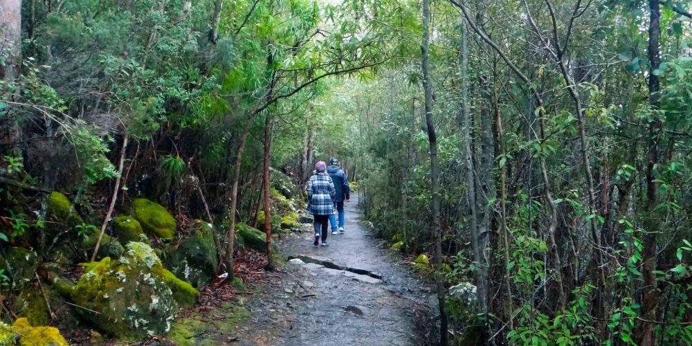 kunanyi-Mt Wellington - Sphinx Rock Circuit - One-Way Bus Pass